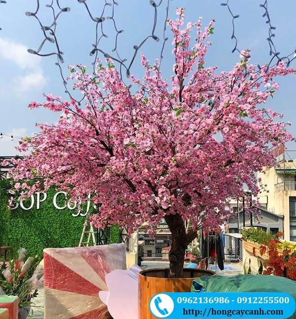 Cây Hoa Anh Đào Giả Màu Hồng