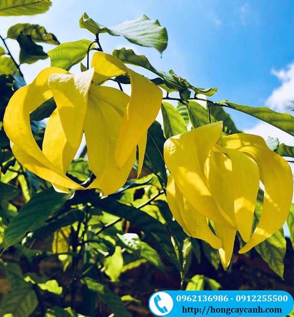 Cây hoa dẻ