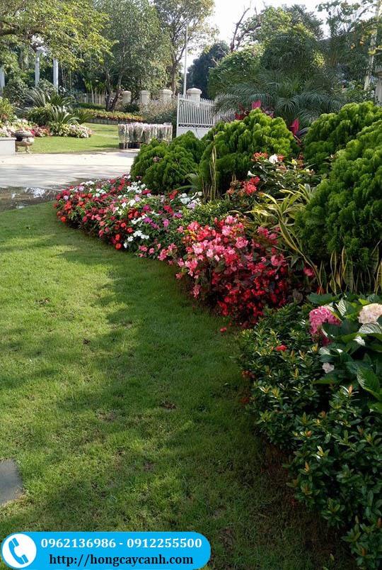 Cây Sân Vườn Biệt Thự Ngày Tết