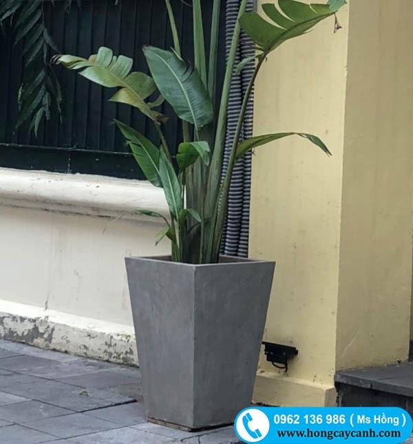 Chậu vuông cao 45cm miệng 40cm
