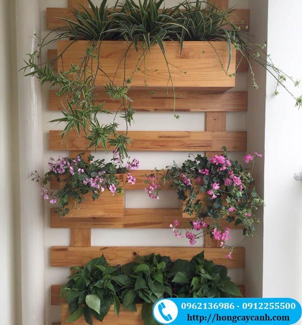 Khung tường gỗ Caosu treo giỏ hoa