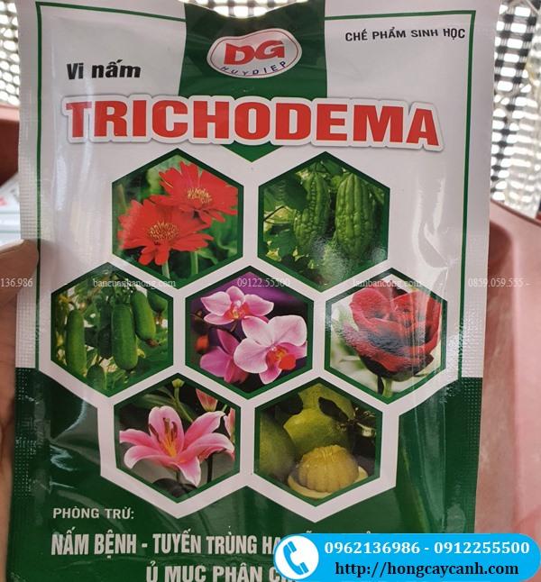 Vi Nấm Trichoderma